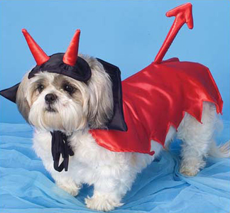 67: Devil costume for dogs